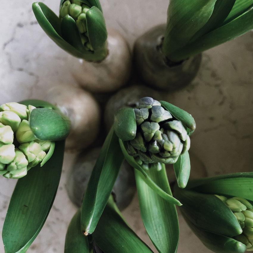 Hyazinthen Blueten Wachsfuß Blumen - DIY | Hyazinthen in Bienenwachs - das schönste Upcycling im Frühling