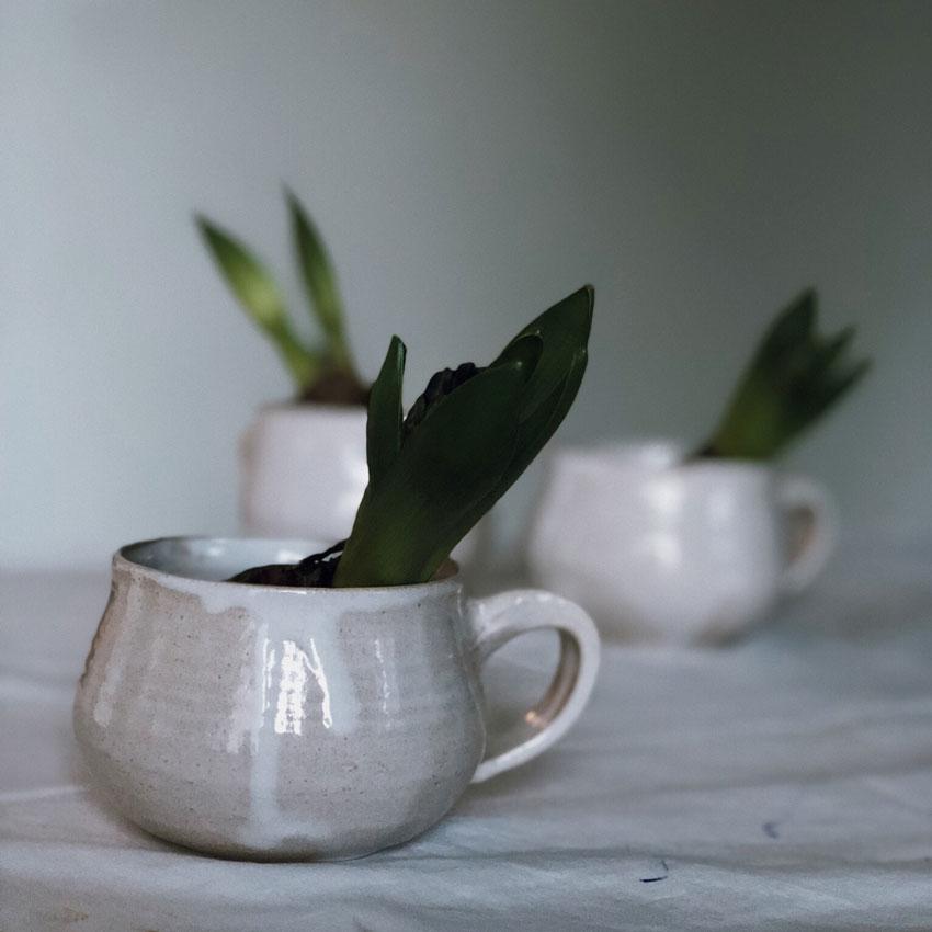 Hyazinthen Gruen Knospen Tasse ton - DIY | Hyazinthen in Bienenwachs - das schönste Upcycling im Frühling