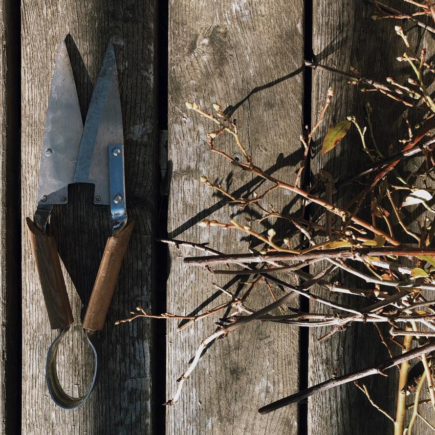 Gartenschere Eichenholz Obstbaum schneiden - Unser Dachgarten im Januar + DIY Mini Gewächshäuser
