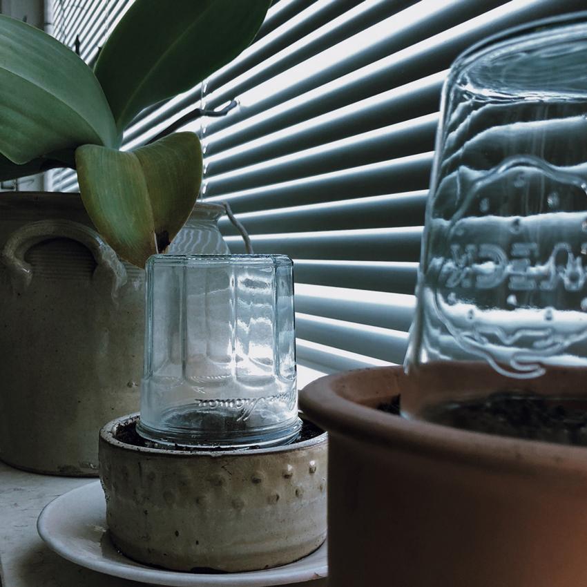 Minigewaechshaus zerowaste nachhaltig Glas Einmachglas - Unser Dachgarten im Januar + DIY Mini Gewächshäuser