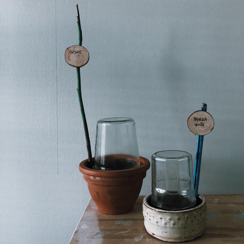 Pflanzenstecker Holz Stoecke Holzscheiben Minigewaechshaus Anpflanzen - Unser Dachgarten im Januar + DIY Mini Gewächshäuser