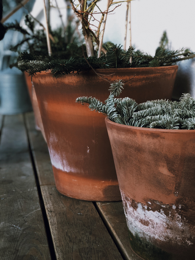 Terrasse winterfest Frostschutz Obstbaeume Pflanzen Tannenzweig - Unser Dachgarten im Januar + DIY Mini Gewächshäuser
