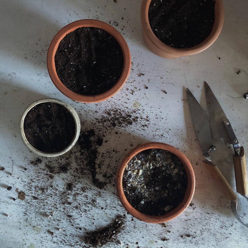 vorziehen anpflanzen Gartenschere Bambus Hornspaene Erde - Unser Dachgarten im Januar + DIY Mini Gewächshäuser