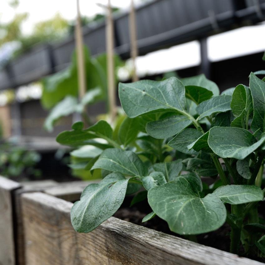 Hochbeet Holz Pflanzen Anbauen - Gärtnern mit Kinder - unser Dachgarten im April