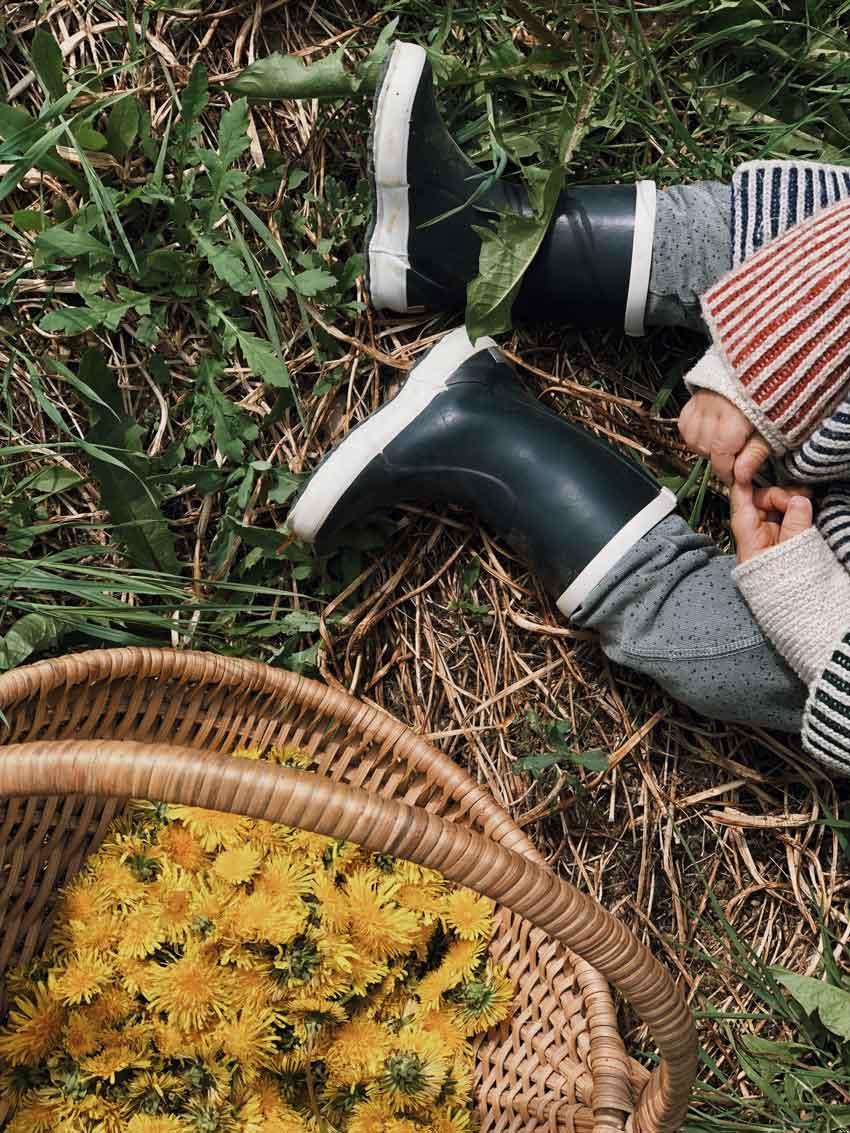 Loewenzahn Korb Blueten Kind - Autark leben in der Stadt | unser Pflanzenhonig aus Löwenzahn
