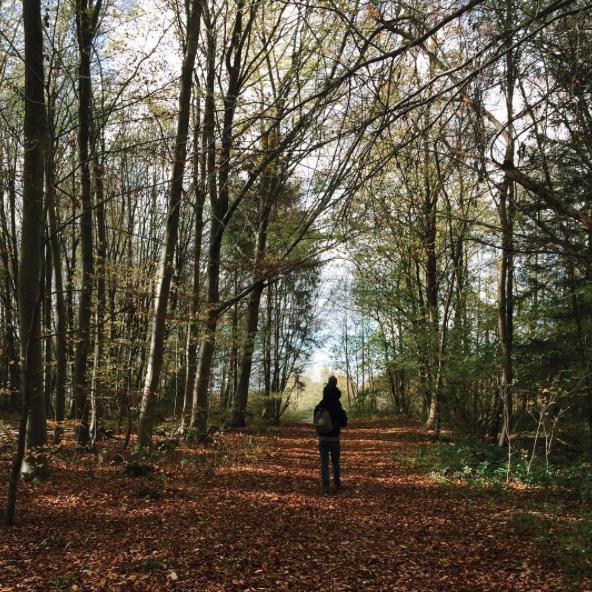 Waldspaziergang Lichtung Herbst Wald - pictured