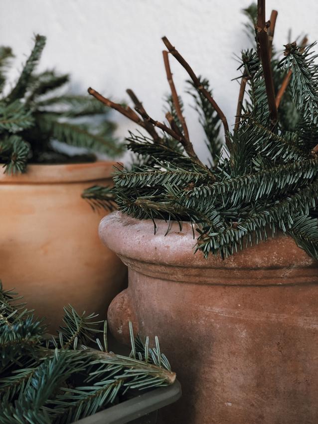 Pflanzen Tontopf Terracotta Tannenzweige Pflanzenschutz - Unser Dachgarten im Januar + DIY Mini Gewächshäuser