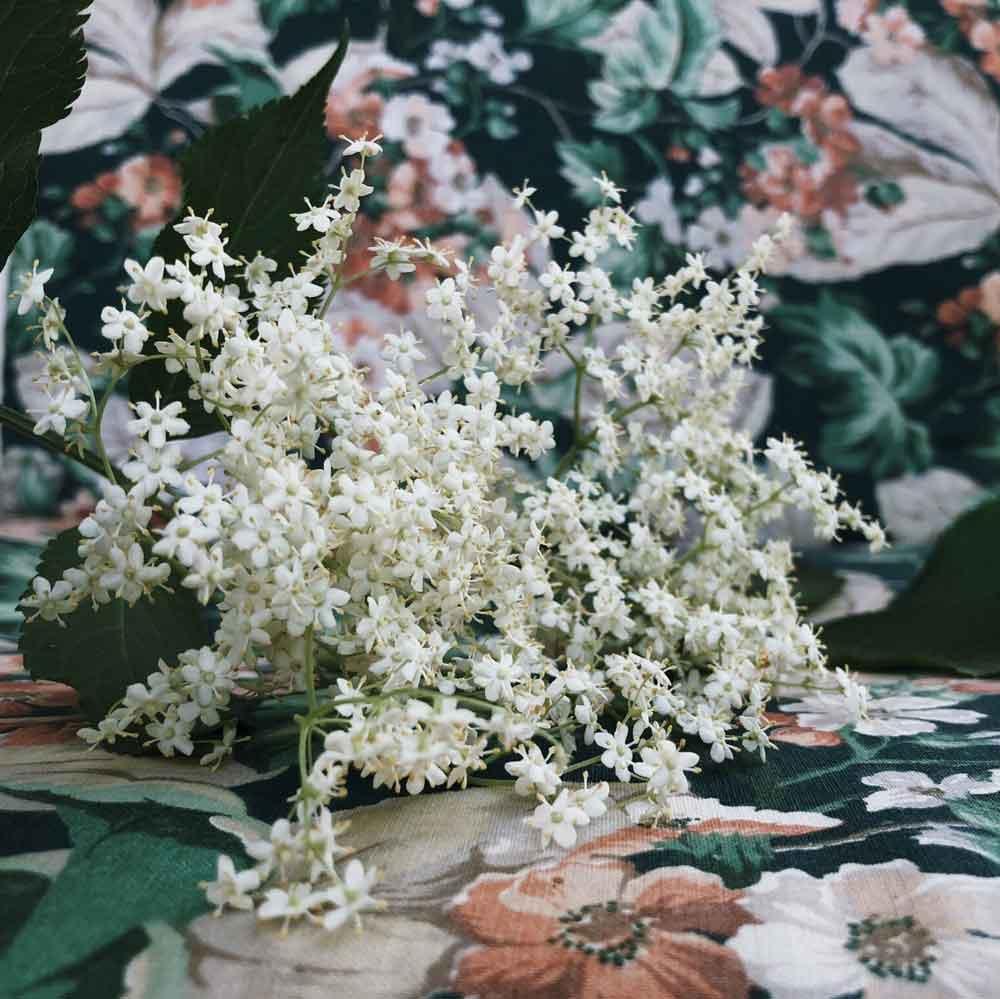 Holunder Holunderbluete Retro Garten Holunderdolde - 10 Ideen die du dieses Wochenende mit Holunderblüten machen kannst