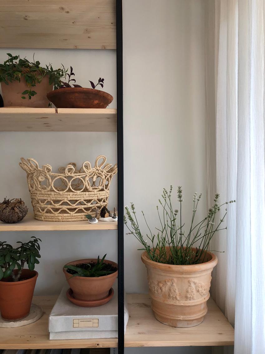 Regal Pflanzen Terracotta Lavendel Zimmerpflanzen - Selbstversorger in der Stadt | No.I