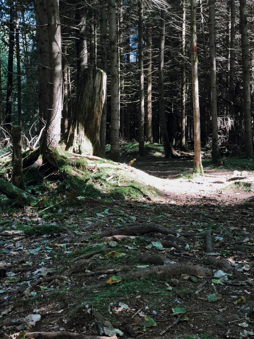 10 Walderlebniszentrum gruenwald Wald Familienausflug Muenchen Waldlichtung - MUNICH | Walderlebniszentrum Grünwald