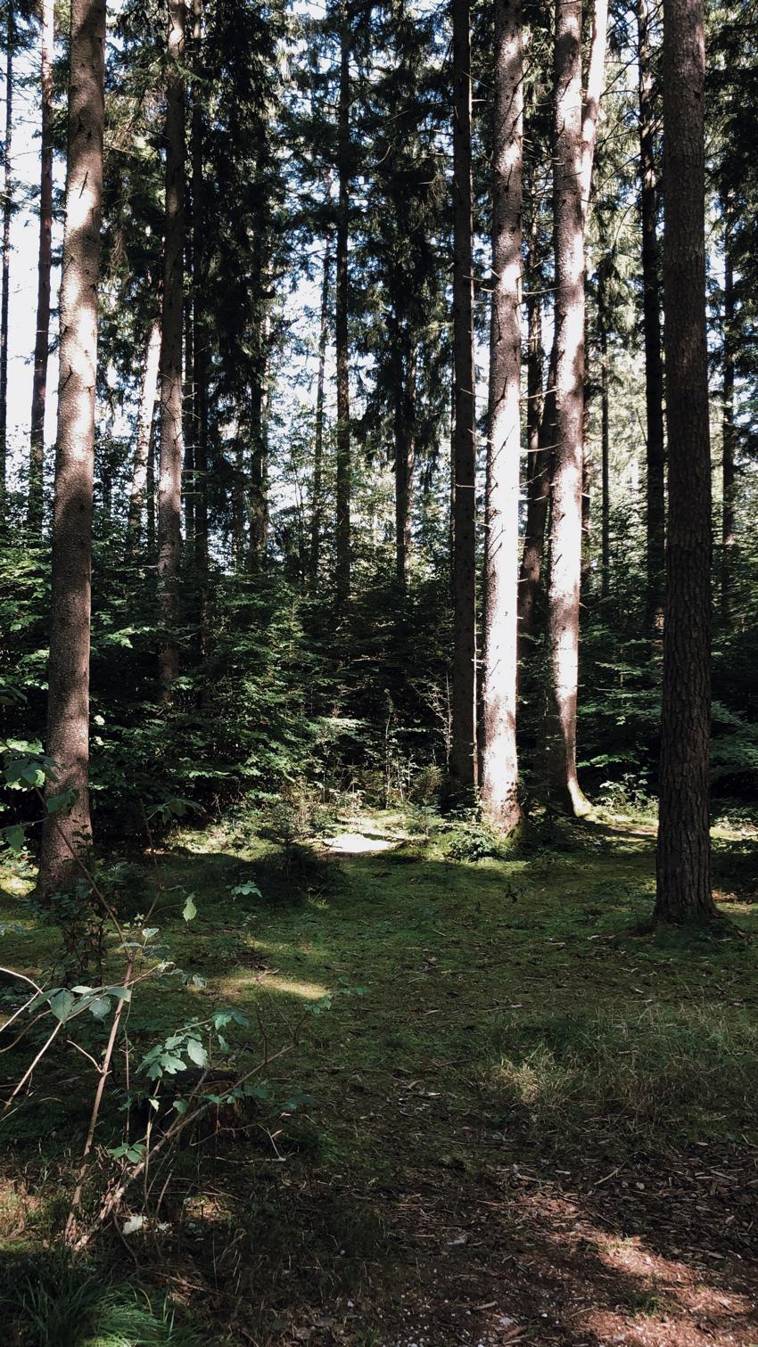8 Walderlebniszentrum gruenwald Wald Familienausflug Muenchen - MUNICH | Walderlebniszentrum Grünwald