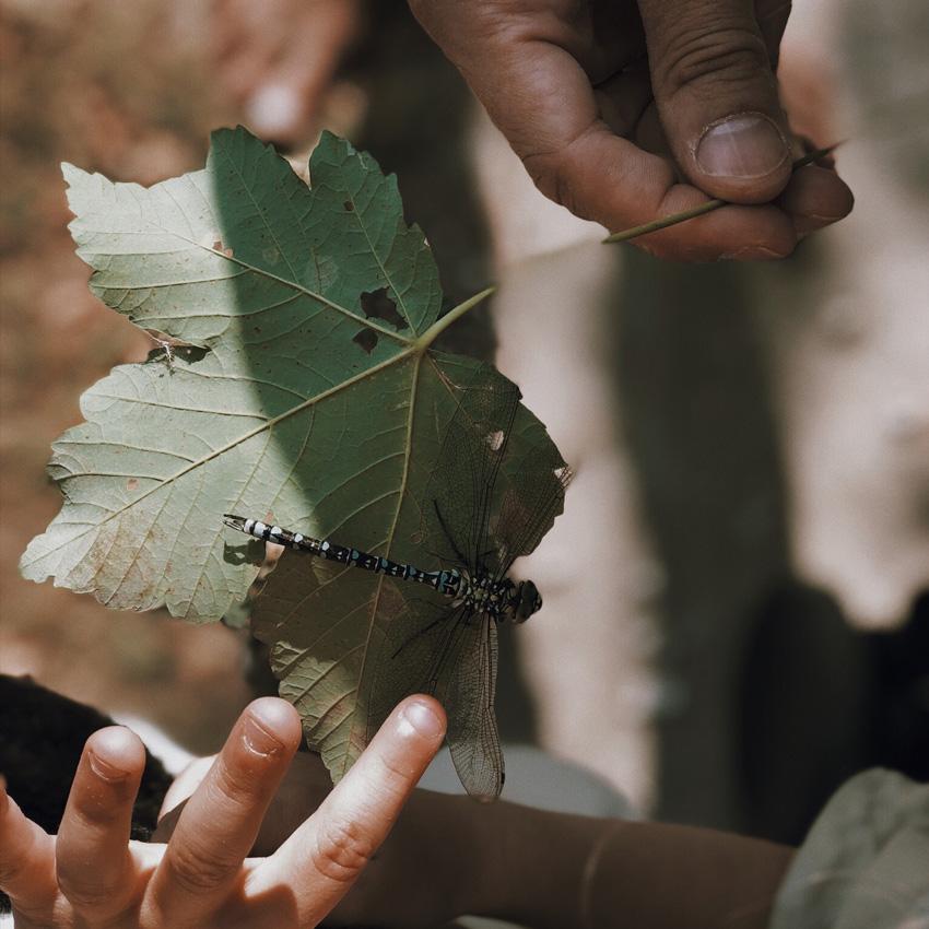 visit austria sehnsuchtskampagne familie urlaub libelle blatt - Ankommen im Urlaub | Familienurlaub in Österreich