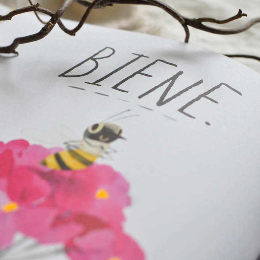 2019 NordSued Die Honigbiene nah 1 - Biene sucht Blüte