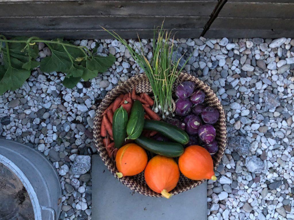 Tag des Gemueses Selbstversorger Ernte Garten Tipps 1024x766 - Tag des Gemüses | Ideen, Tipps und mehr