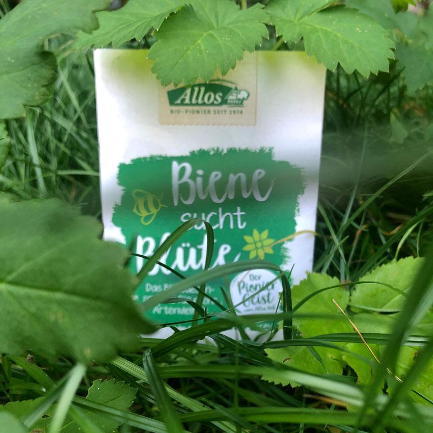 biene bluete projekt saatgut biene sucht - Biene sucht Blüte