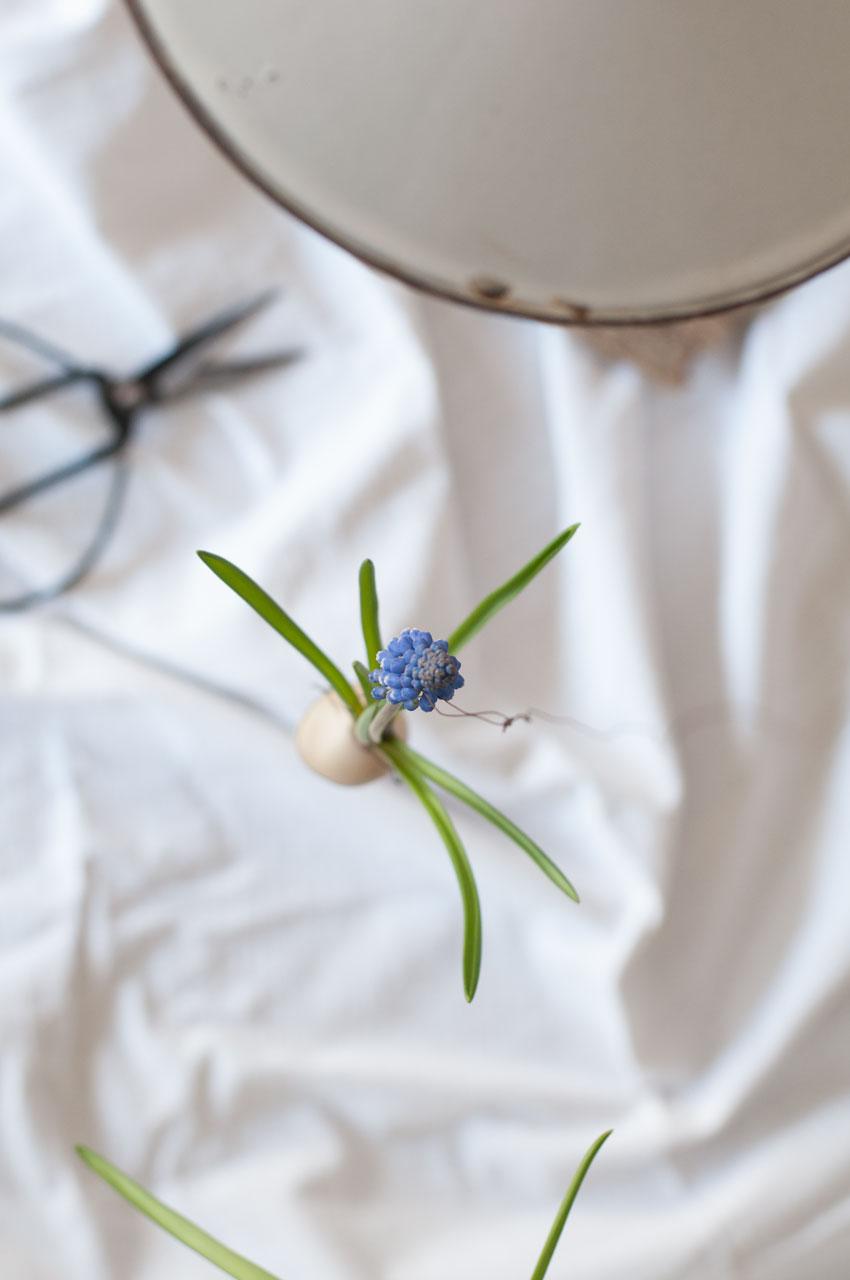 diy traubenhyazinthen wachs zwiebel 05 - Traubenhyazinthen in Wachs | mein hängender Blumengarten
