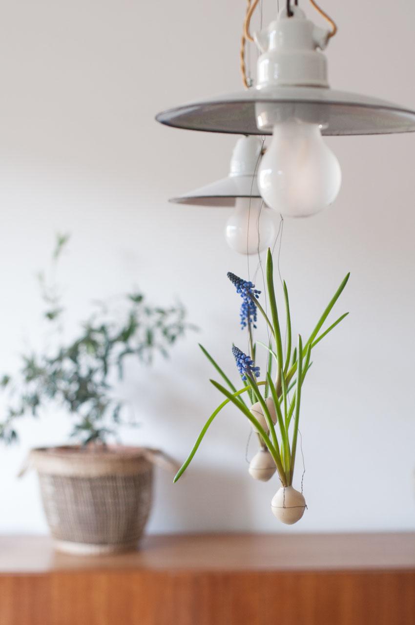 diy traubenhyazinthen wachs zwiebel 07 - Traubenhyazinthen in Wachs | mein hängender Blumengarten