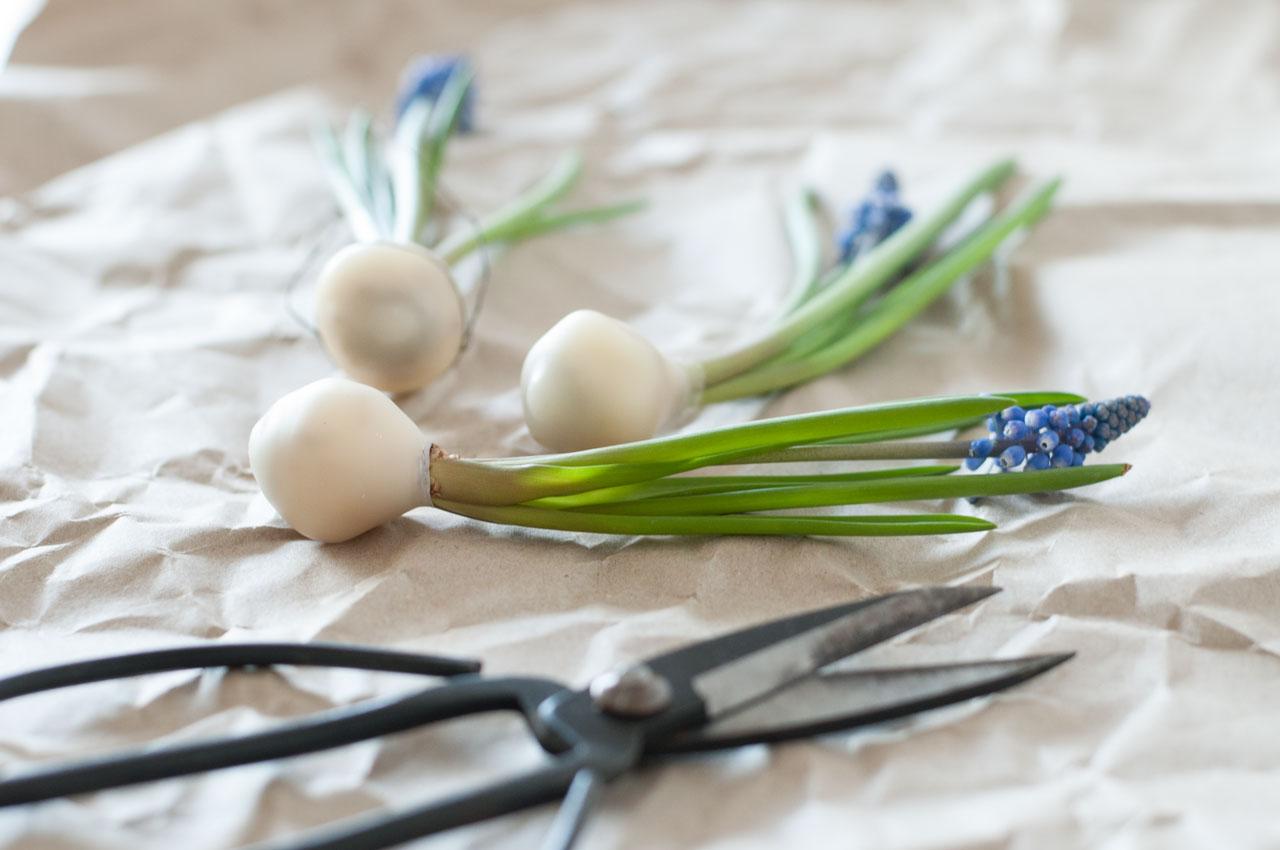 diy traubenhyazinthen wachs zwiebel 08 - Traubenhyazinthen in Wachs | mein hängender Blumengarten