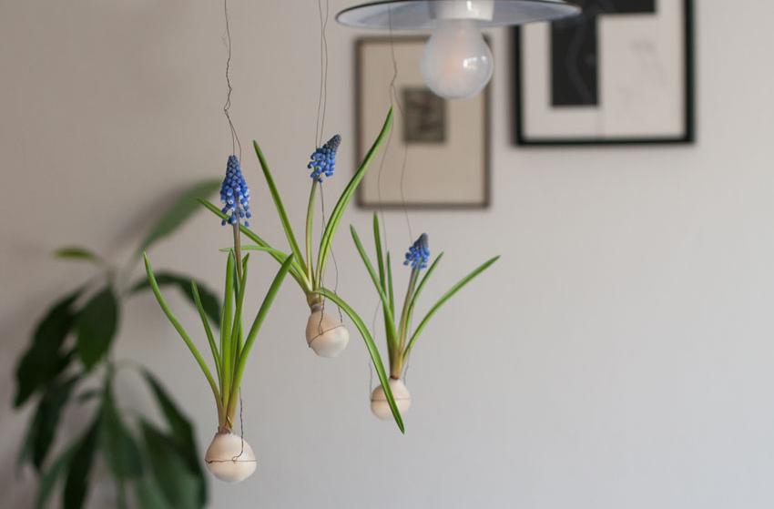 diy traubenhyazinthen wachs zwiebel titel - Traubenhyazinthen in Wachs | mein hängender Blumengarten